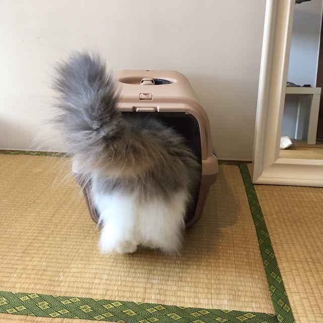 リッチェル犬猫用キャリーバッグは超オススメ|頑丈でお手頃価格だから愛用中