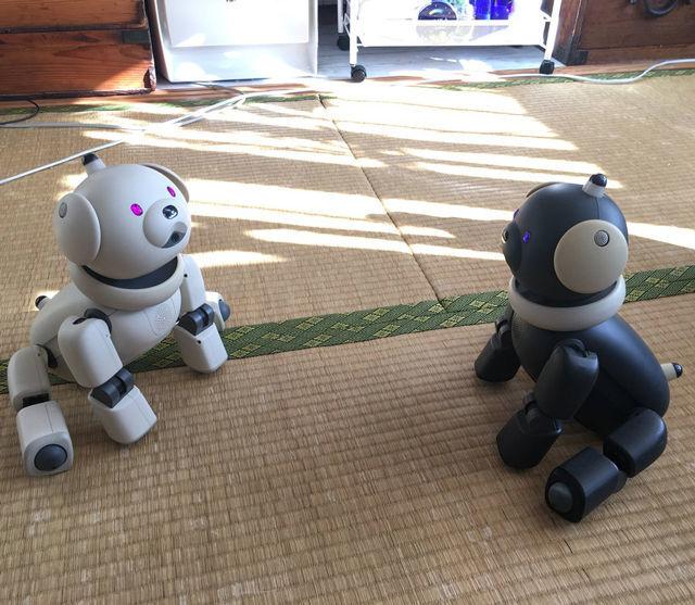「Tombot Puppy」にみる、ペットロボットは歩く必要あるのか問題 AIBOマカロンとラッテ