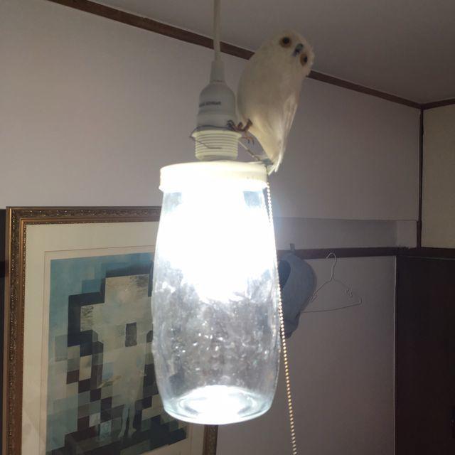 シンプルなガラス瓶のペンダントライトをPUEBCO(プエブコ)の小鳥オブジェでおしゃれにアレンジ