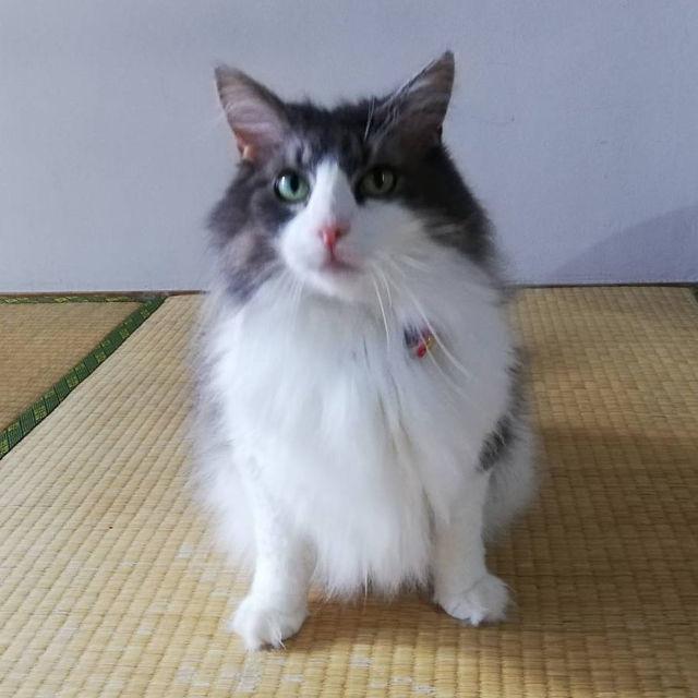 ダイソーの猫首輪に直接名前と電話番号を書く方法【迷子札代用】