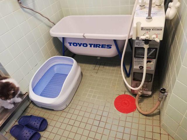おすすめ猫トイレ|インテリアにぴったり!ニャンとも清潔トイレがおしゃれ