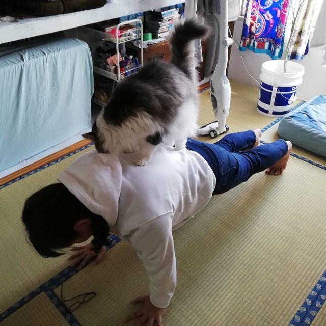 猫ヨガしよう!お家でキャットヨガして、楽しみながらダイエット 太陽礼拝 プランク