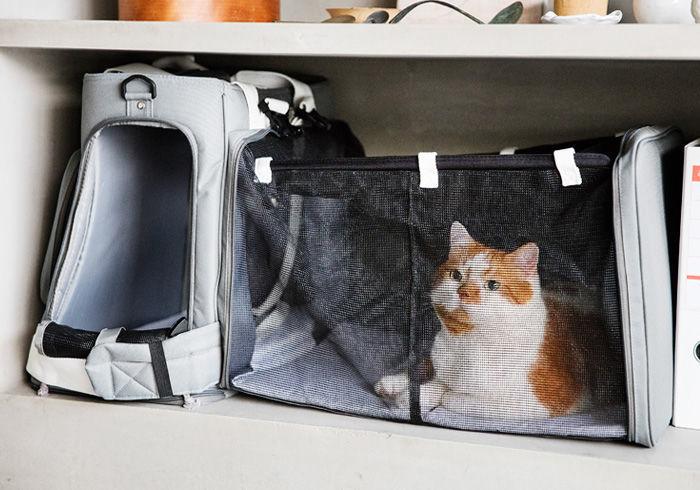 ブログで人気の猫どんこ愛用「リオニマル防災用リュック型ペットキャリー」は超おしゃれ!