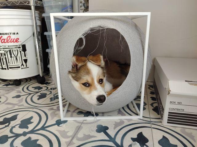 子犬のはるちゃん|キャットハウスを破壊中