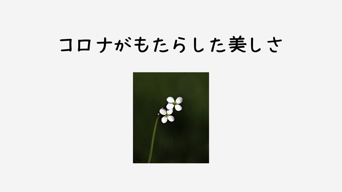 f:id:jin428:20200410134305j:plain