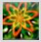 f:id:jinbarion7:20210217113726p:plain