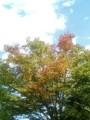 [木][空]おはよう