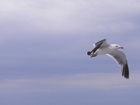 [鳥][北海道]