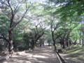 [公園]飛鳥山公園
