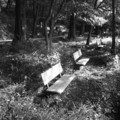 [ベンチ][モノクロ][石神井公園]