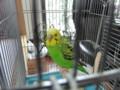 [☆][鳥]