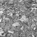 [秋][モノクロ]