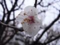 [花][雨]