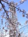 [桜][鉄塔]