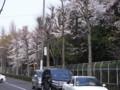 [街角][桜]