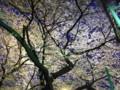 [石神井公園][桜][夜景]