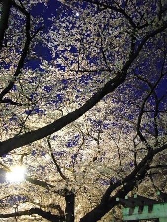 [花][石神井公園]