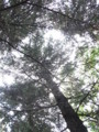 [石神井公園][木]