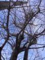 [木][札幌]