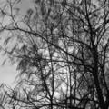 [木][札幌][モノクロ]