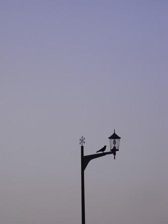 [街灯][鳥]