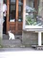 [猫][小樽]