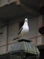 [鳥][小樽]