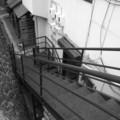 [階段][小樽][モノクロ]