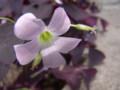 [花][札幌]