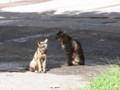 [猫][札幌]