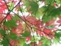 [紅葉][札幌]