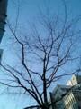 [木][☆]おはよう