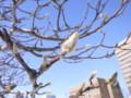 [札幌][木]