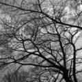 [木][モノクロ]