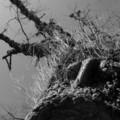 [モノクロ][木]