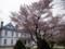 [☆][桜]