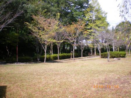 f:id:jinkan_mizuho:20101013132842j:image