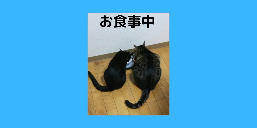 f:id:jinseihapipi:20190823233858p:plain