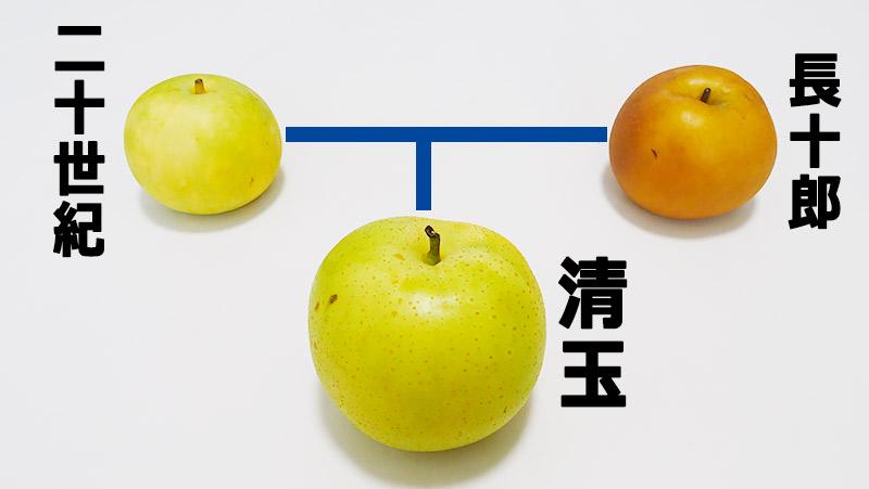 f:id:jinushikeisuke:20201001220626j:plain
