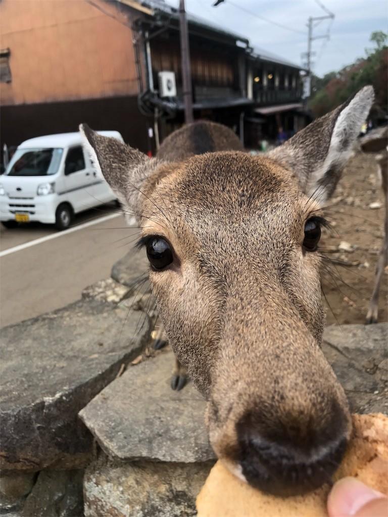 f:id:jironakayama:20181113080349j:image
