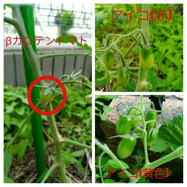 f:id:jiyu-kenkyu-kazoku:20200720080346j:plain