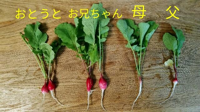 f:id:jiyu-kenkyu-kazoku:20200721145818j:image