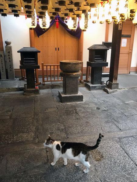 法善寺にいた猫