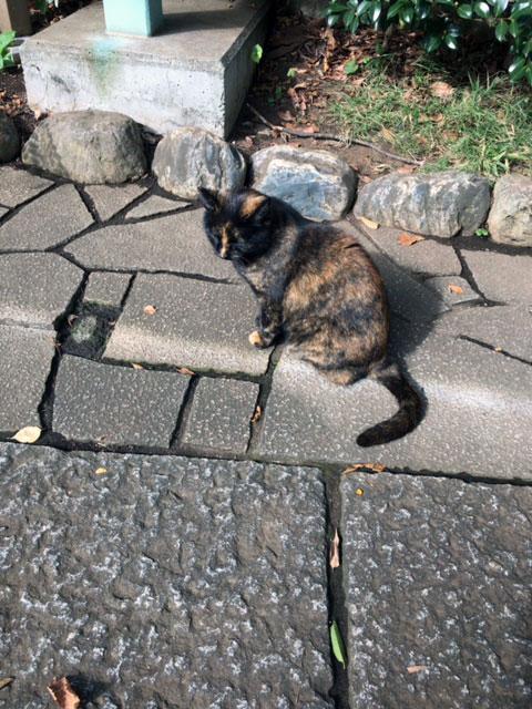 九品仏の猫
