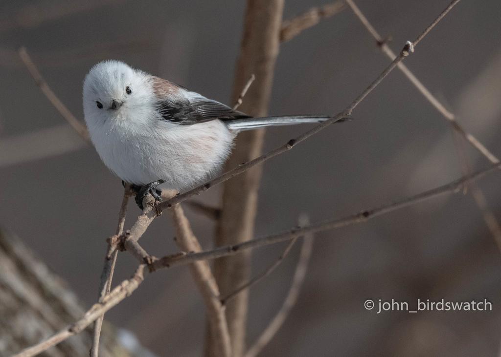 f:id:john_birdswatch:20190117183501j:plain