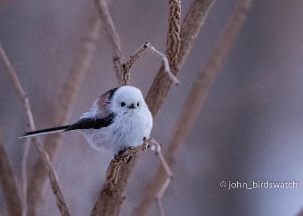 f:id:john_birdswatch:20190117190230j:plain