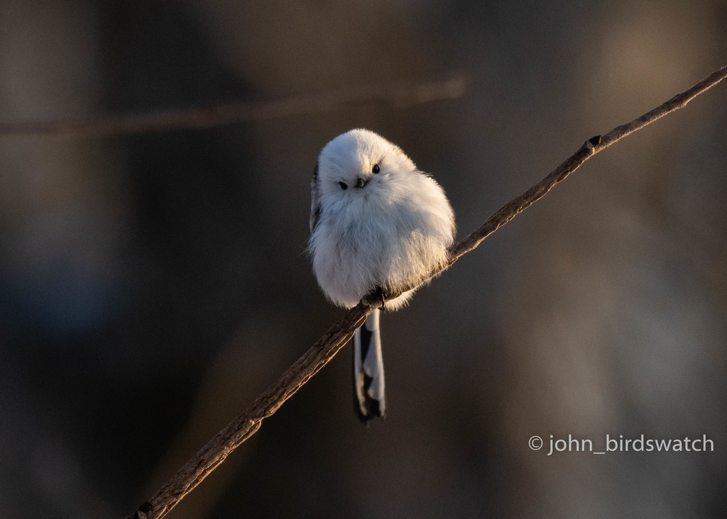 f:id:john_birdswatch:20190117190809j:plain