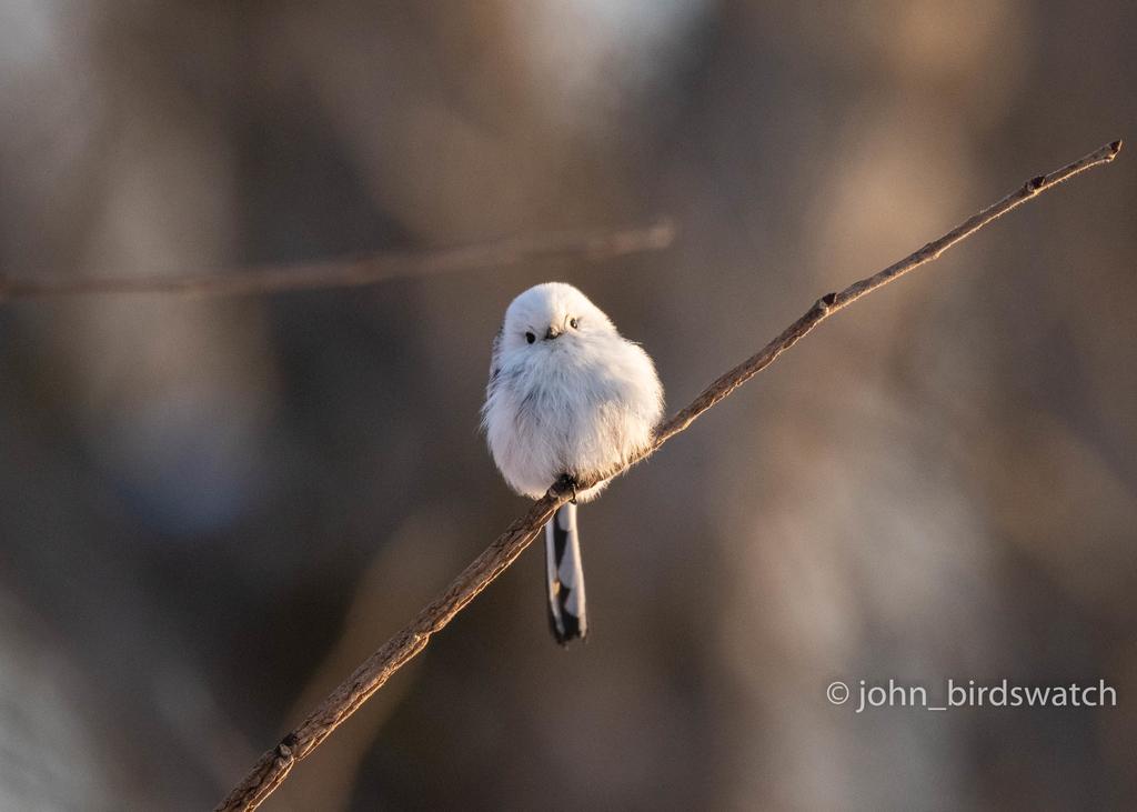 f:id:john_birdswatch:20190117191108j:plain