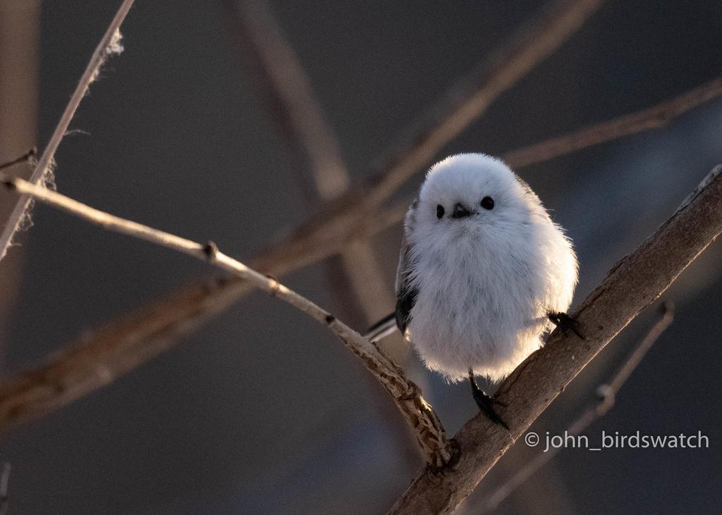f:id:john_birdswatch:20190117191521j:plain