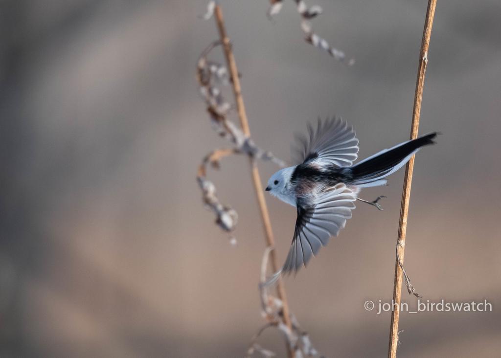 f:id:john_birdswatch:20190117192217j:plain